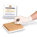 Nasco Venipuncture Training Aid, 4-Vein Model